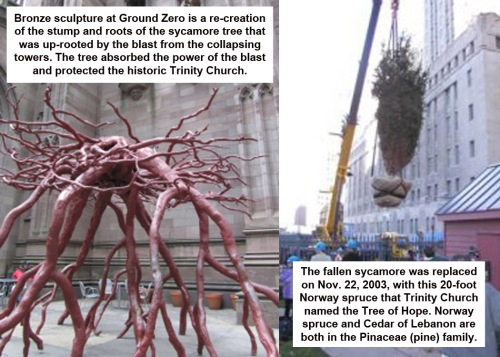 Ground Zero - Trinity Church trees