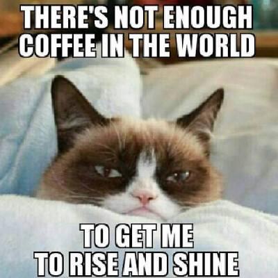 a.aaa-Grumpy-Cat-3