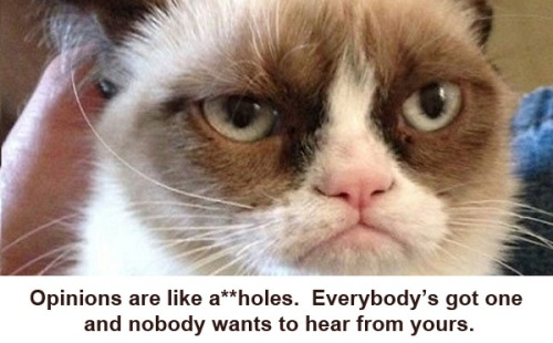 CAT Grumpy Cat - opinions are like aholes