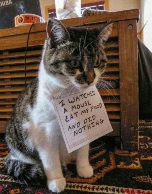 CAT shame sign