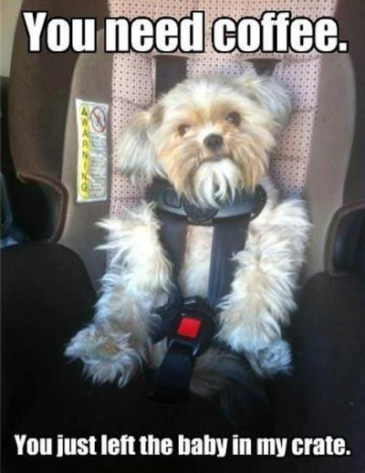dog in carseat