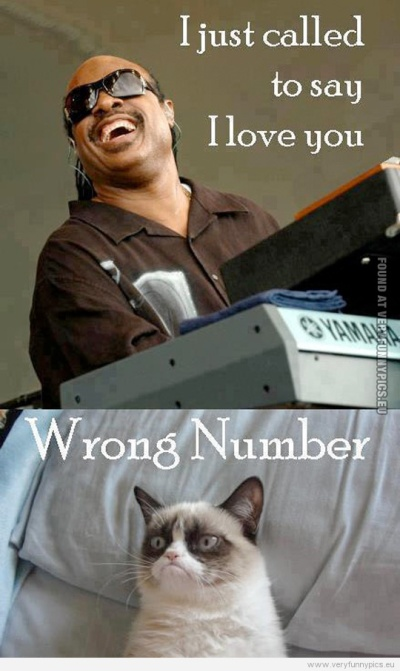 funny-picture-stevie-wonder-and-grumpy-cat