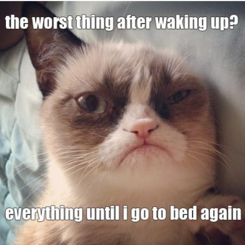 Comic Pictures of Cats Grumpy-cat-meme-comic