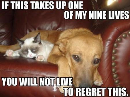 grumpy-cat-with-dog