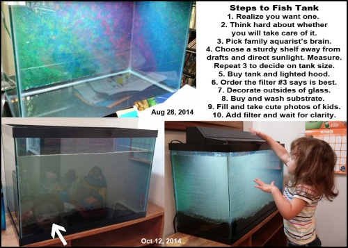 2014_10 12 Steps to fish tank