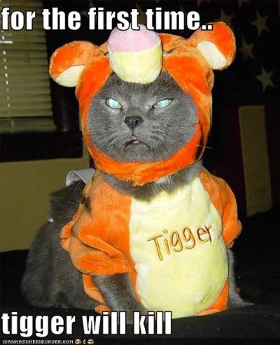 Cat Halloween funny pictures (96)