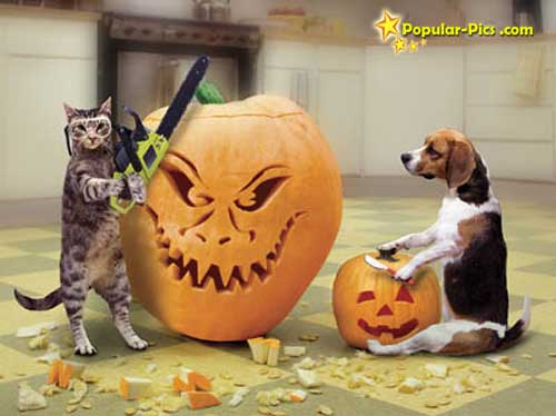 Funny cats vs funny dogs (14)