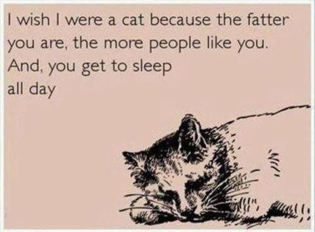 funny-ecard-cat-life