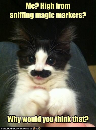 funny_cat_405_2