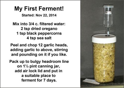 2014_11 23 My first ferment - pickled garlic