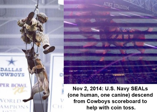 2014_11 Seal and dog rappel into NFL stadium
