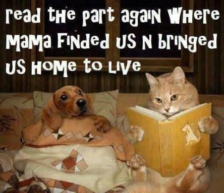 *bedtime story