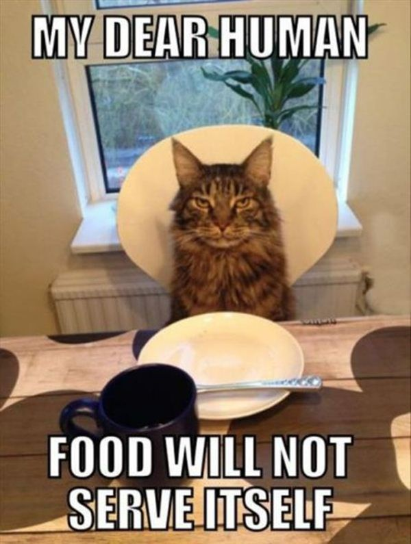 cat food will not serve itself pn1 happy thanksgiving!