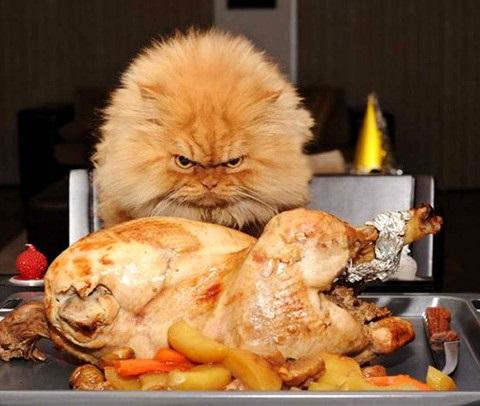 CAT with turkey
