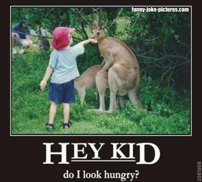funny-child-feeding-hungry-humping-kangaroo