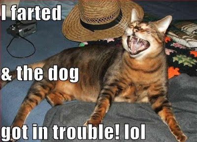 i-farted-cat-blames-it-on-the-dog
