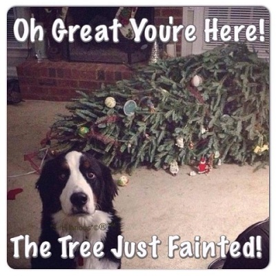 DOG Cmas tree fainted
