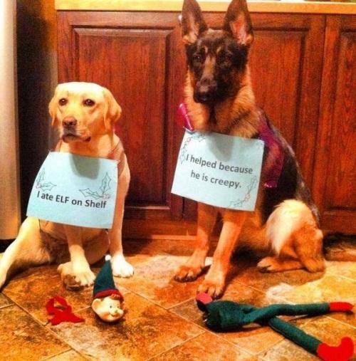 ELF DOG Ate Elf on Shelf
