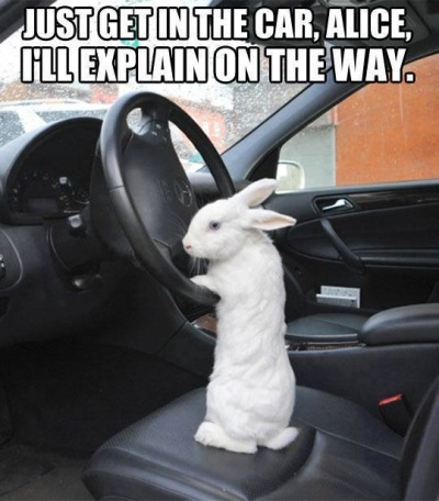 RABBIT Just get in the car Alice - sent to KK