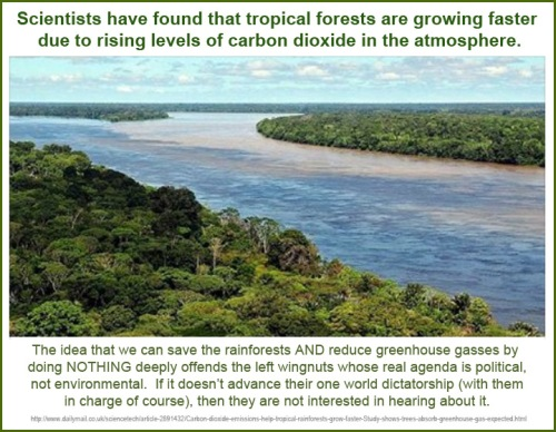 2014_12 30 CO2 makes tropical rainforest grow