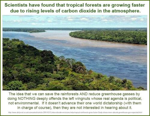 2014_12 30 CO2 makes tropical rainforest grow