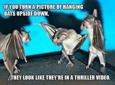BATS Upside down FUNNY - sent to KK