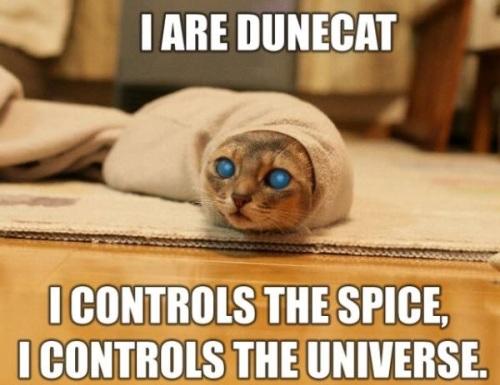 CAT Dune