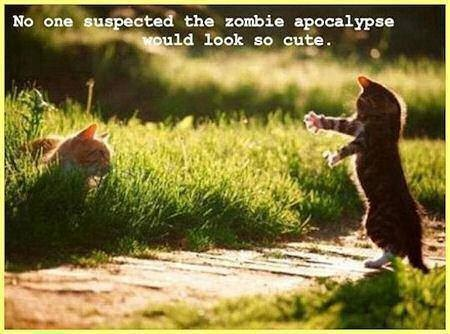 CAT Zombie apocalypse