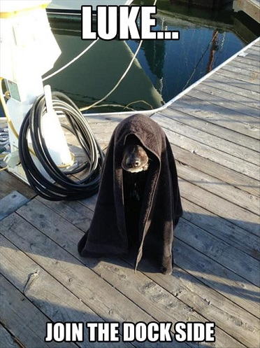 DOG Luke join dock side