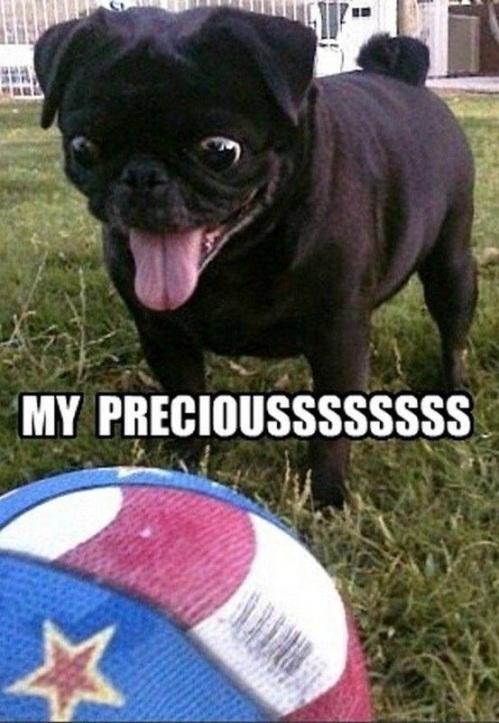 DOG My preciousssss
