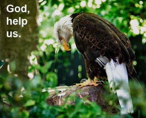 EAGLE God help us