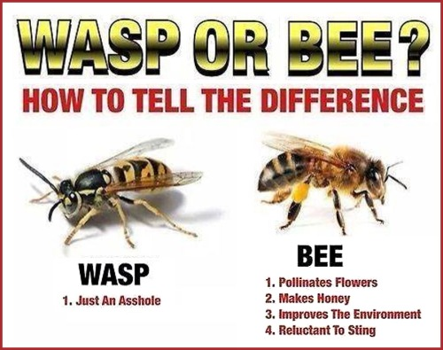 Left wings vs Right wings Wasp or Bee