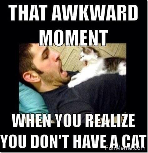 Funny Cat Memes 19 | June | 2015