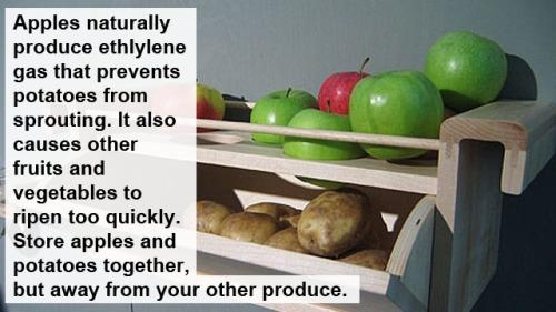 apple potato storage bin