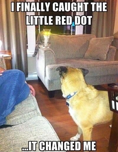 CAT caught red dot