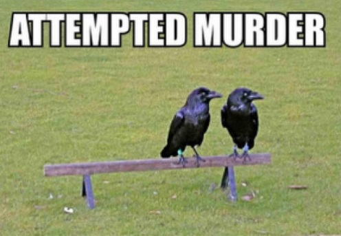 CROWS Attempted Murder
