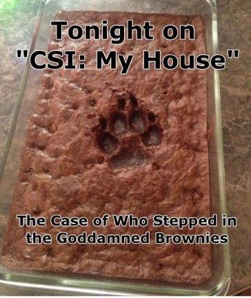 DOG CSI brownies
