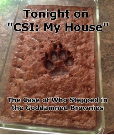 DOG CSI brownies