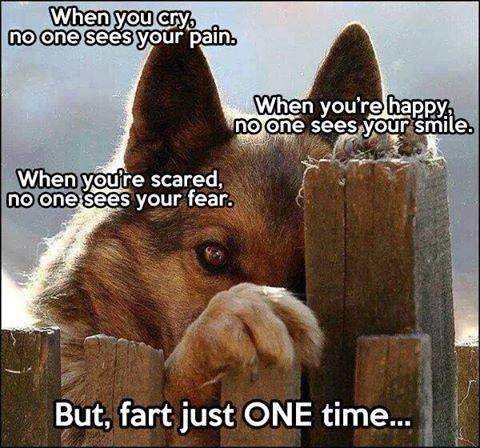 DOG lament