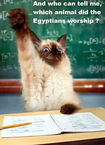 CAT worshipped by Egyptians - sent to KK