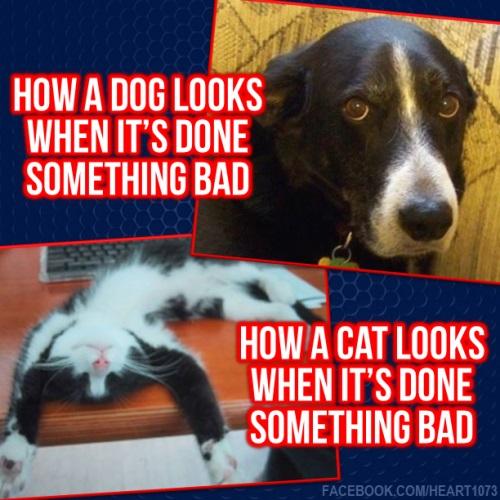 DOG CAT guilt