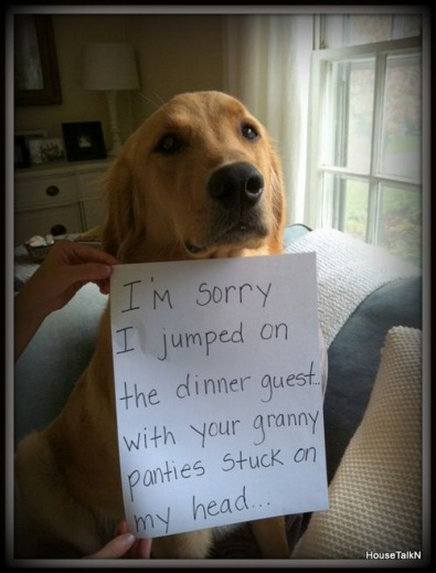 DOG sorry panties
