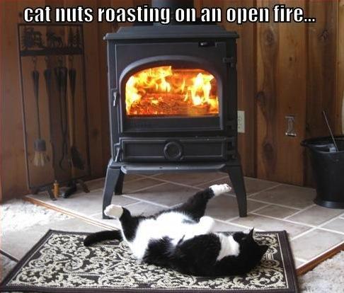 cat nuts