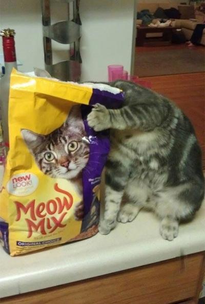 CAT Meow mix.jpg