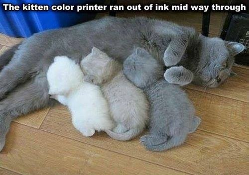 CAT Color printer out of ink