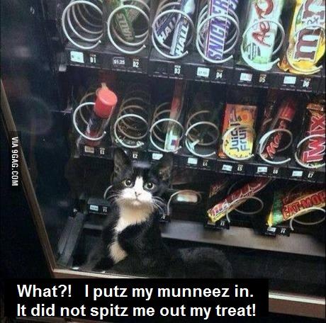 CAT kittie inside vending machine