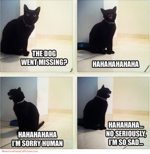 CAT laughing over missing dog