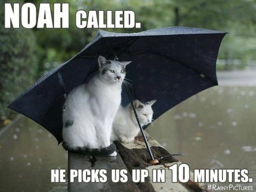 CAT Noah called