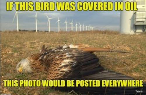 Eagle killed by wind mill