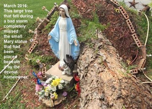 2016_03 Tree misses Mary